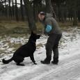 Idag så sammanstrålade jag med Tereze Lindberg och Jonas Stål ute på Revinge. Vi skulle spåra och köra uppletande med våra hundar. Vi trampade spår till varandra. Jag ville ha […]