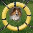 Agility säsongen är lång både för hundar och människor. Det arrangeras tävlingar året runt. Rebecka Borglund ligger i hårdträning inför årets stora begivenheter. Hon är landslags meriterad och har tävlat […]