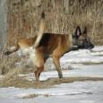Tillgängligheten hos hundar varierar mycket. Dels så finns det vissa hundraser som genetiskt är framtagna för att inte vara så öppna och tillgängliga av olika anledningar. Precis som alltid finns […]