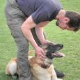 Det finns många filosofier om dominans. Vissa etologer menar att detta fenomen bara visar sig hos tamhunden. Det kanske är så? Dagens hundar lever oftast på en begränsad yta. Där […]