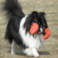 Konditionen är på topp? Det ställs stora krav på våra tävlingshundar? De ska göra si, och de ska göra så. Men hur mycket hänsyn tar vi till oss själva? Många […]