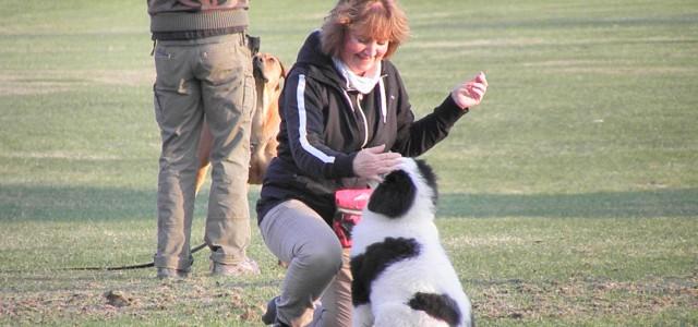 Vilket språk pratar du? När vi håller på med att lära våra hundar olika moment, är det vissa saker som är väldigt viktigt för inlärningsklimatet. En sak som kan vara […]