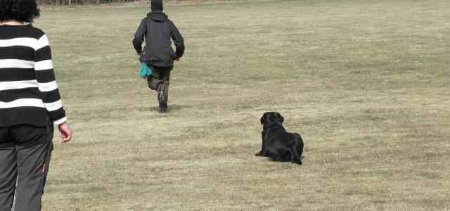 Det fria skönet! Som alla vet är hundsport en bedömnings sport. Med allt som detta för med sig. Den ena domaren tycker si, och en annan tycker så. Våra domare […]